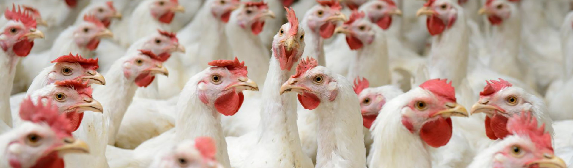 SC Poultry Farming